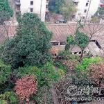 南周程焕文   鲁迅纪念馆——广州历史与文化的错乱(组图)