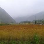 姚小远 | 第三天:祁连山下好牧场