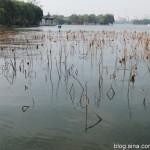 刘亚伟 | 深秋的大明湖