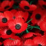 BBC | 特写:佩戴罂粟花背后的故事