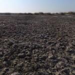 内蒙古托克托多座村庄土地因污水无法耕种(图)