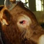 一五一十 | 动物的眼泪