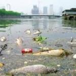 何清涟 | 饮水卫生上的贫富差距 — 中国生态系统中的等级差别