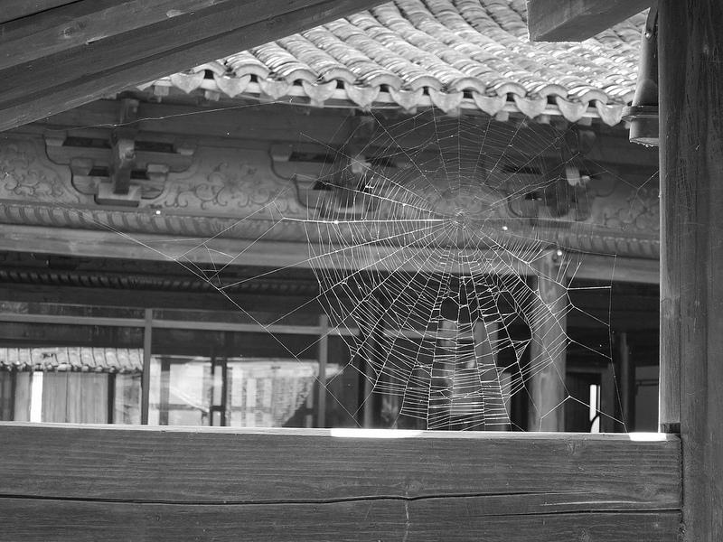 Untitled (Spider Web)