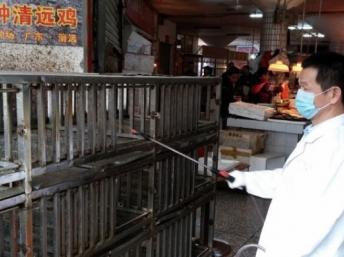 法广|酒楼砧板有H7N9易生交叉感染中国一日多6人感染