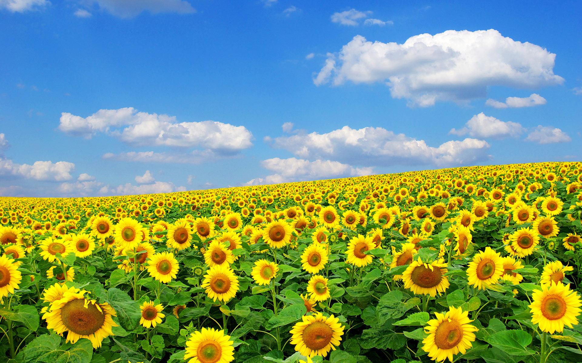 纽约时报 | 造反的太阳花:千禧世代要唱自己的歌