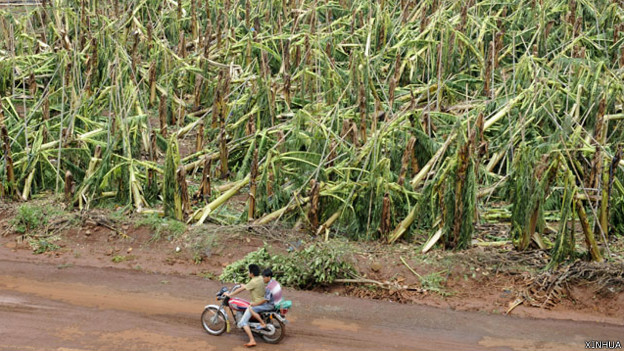 140720050024_cn_china_typhoon_xuwen_crops_624x351_xinhua