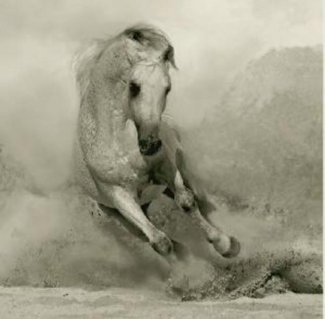 【诗】许许 : 一匹马的七种逃亡