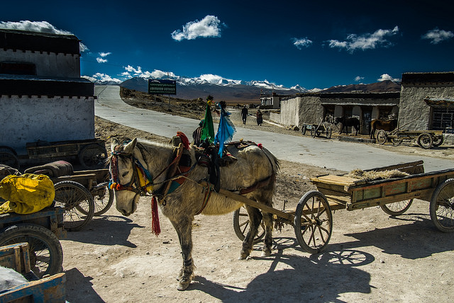 Sleeping Pony in Tingri Market, Tibet