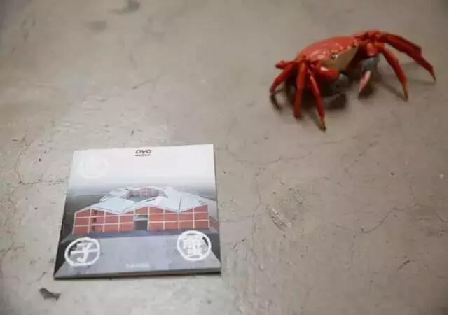"""大闸蟹 2009年,艾未未在上海新建的马陆工作室完工不久,突然被当地政府宣布为违章建筑。艾未未后发起""""河蟹""""盛宴,请大家吃大闸蟹,""""有800多人去吃大闸蟹,之后房子就被拆了""""。"""