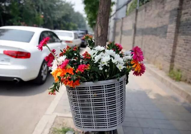 艾未未 鲜花