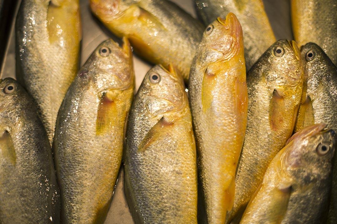 端传媒 老人与海,然而海里并没有鱼