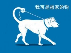 赵家人的狗