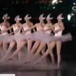 小波福娃|如何评价本次G20峰会的水上芭蕾《天鹅湖》