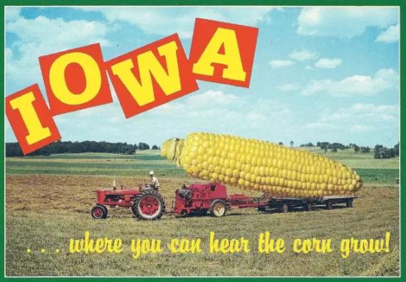 (爱荷华作为美国中部传统农业州,经常被和玉米地联系起来)