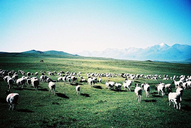 【院内故事】格瓦拉:邪路,羊圈和猪圈