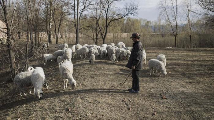 "BBC 抗生素耐药性超级细菌""可能渗透中国社区"""