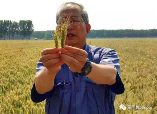 剥洋葱people | 川崎广人:决定死在中国农田里的日本老人