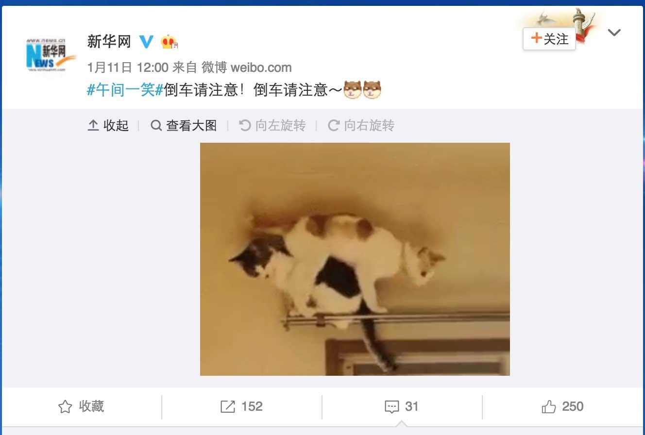 """【立此存照】新华网发布""""猫(mao)倒车""""微博 引围观后删除"""