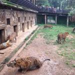拯救表演动物   沉痛悼念这25年的野保