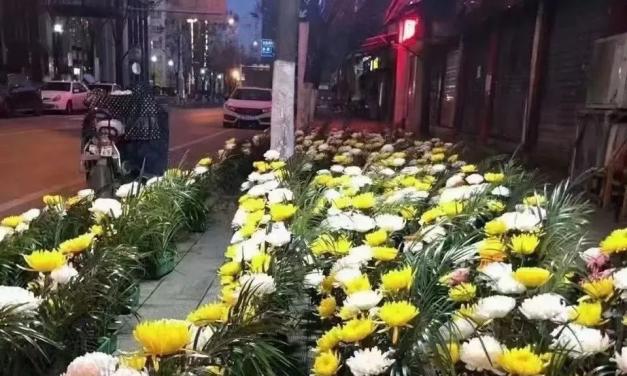 王昊轩的韭菜园|别怪知识分子不发声