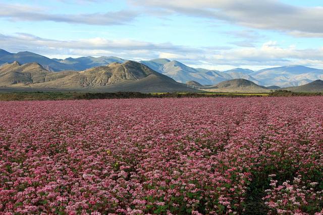 The fields outside of Shigatse