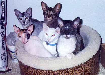 File:Five cats.jpg