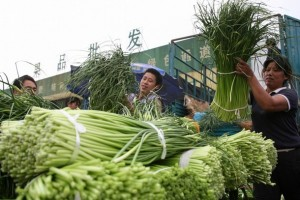 Farmers in Shanghai unload shocks of chives at the marketplace.