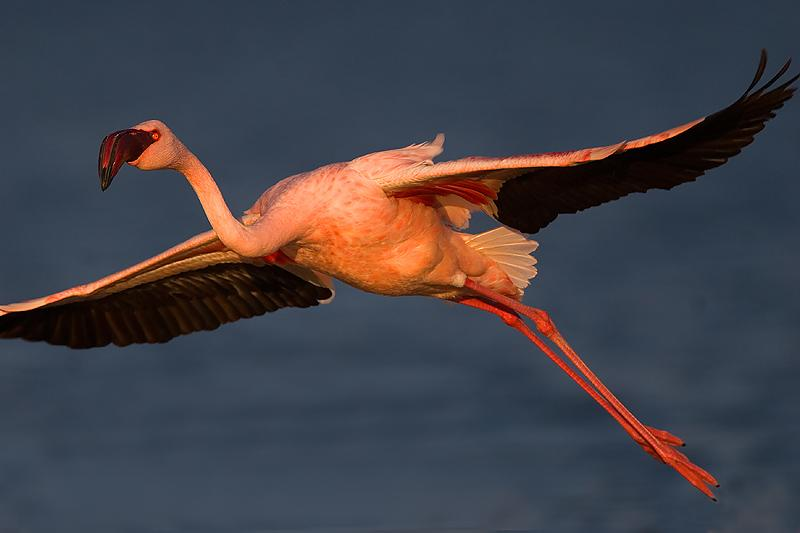 flamingos5