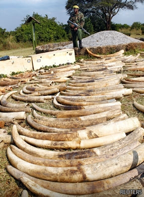 "China's Demand for Ivory ""Out of Control"""