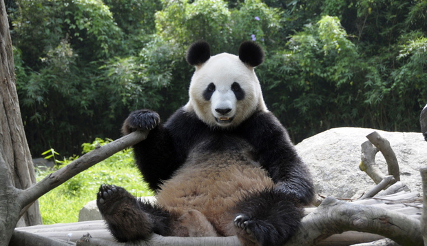 """""""Why I Hate Pandas and You Should Too"""""""