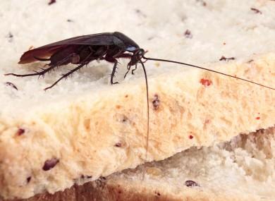 Escaped Roaches Stir Officials in Jiangsu