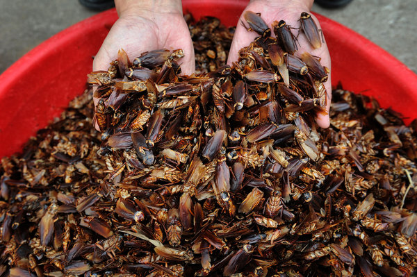 Cockroach Farms Multiplying in China