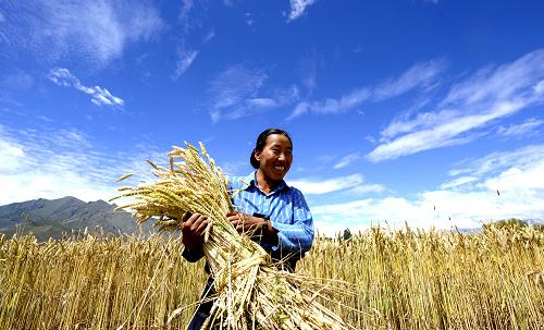 Should China Import More Grain?