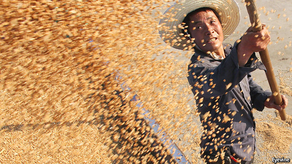 Majority of Chinese Oppose American GM Crops