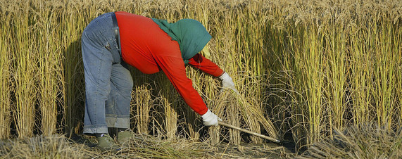 8.3 Million Acres of Chinese Farmland Lost to Pollution