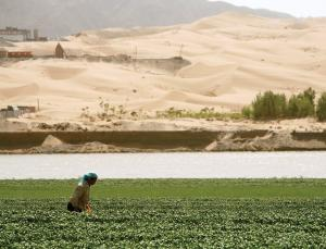 Bacteria Could Help Reclaim China's Desert