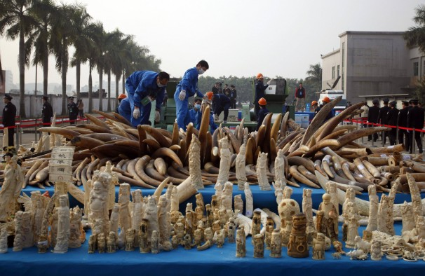 China's Six-Ton Ivory Crush Debated