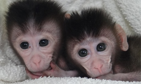 Nanjing Team Creates Genetically Modified Monkeys