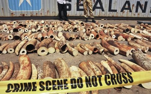 Kenya Extradites Alleged Ivory Kingpin to China