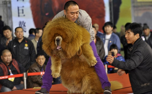Raising Dogs For Food In China