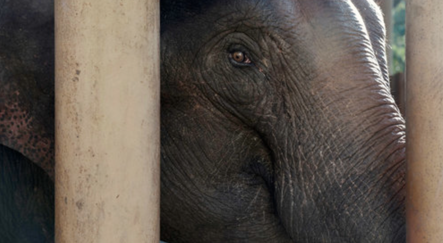 Rubber Boom Threatens Yunnan's Elephant Haven