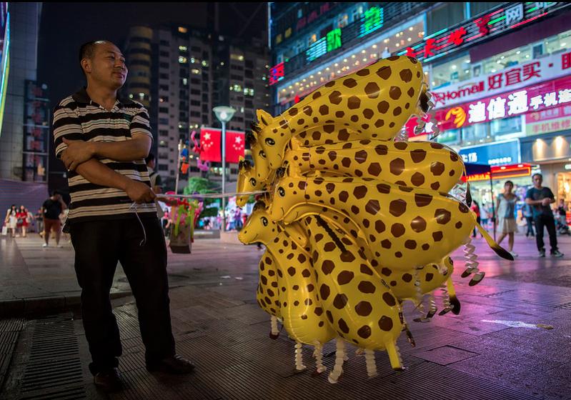 Chubby giraffes