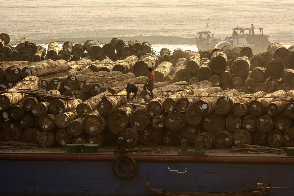 Chinese Logging Threatens Myanmar Ceasefire