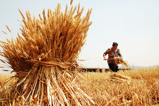 China Denies Posing Threat to Global Food Security