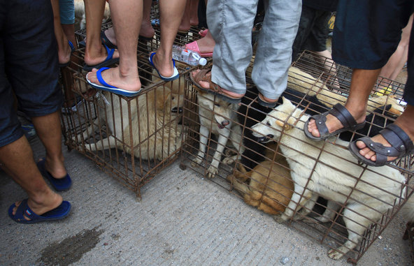 Yulin Dog Meat Festival Proceeds Despite Protests