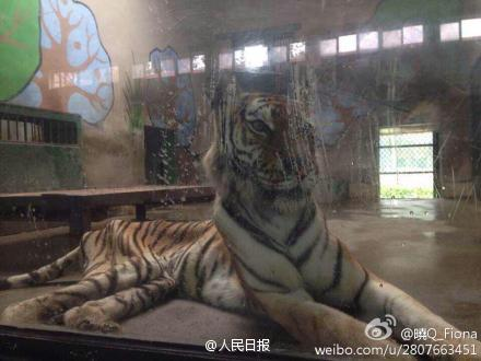 Netizen Voices: Tiger Abuse
