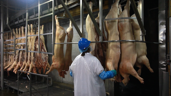 Investigating China's Purchase of American Pork