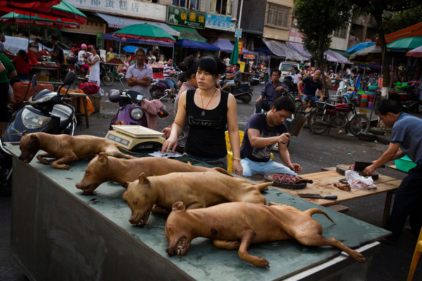 Dog Meat Festival Draws Ire of Animal Rights Activists