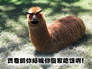 """Jia Junpeng, your mother is calling you home for dinner!"" screams the grass-mud horse. (Source: ChinaSmack)"